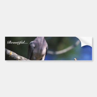 Band-tailed Pigeon Bumper Stickers