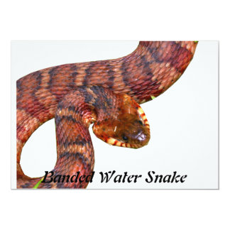 Banded Water Snake 13 Cm X 18 Cm Invitation Card