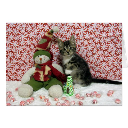 Bandit Kitten Cat Rescue Christmas Card