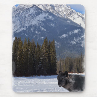Banff Wolf in Winter with Mt Cascade Mouse Pad