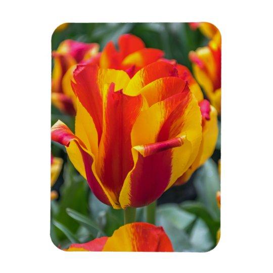 Banja Luka tulips fridge magnet