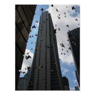 Bank One Plaza vs. Pigeon Escape  Poster
