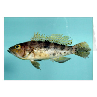Bank Sea Bass Card