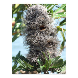 Banksia Postcard