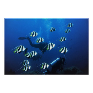 Bannerfish and Divers Poster