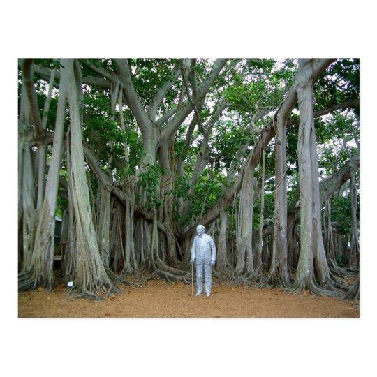 Banyan Tree Edison & Ford Estate Ft Myers Florida Postcard