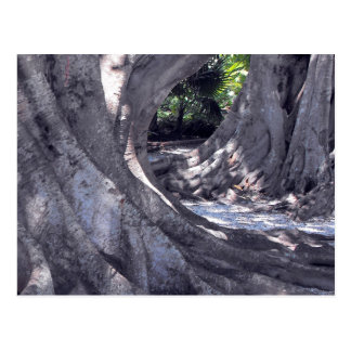 Banyan Trees Postcard