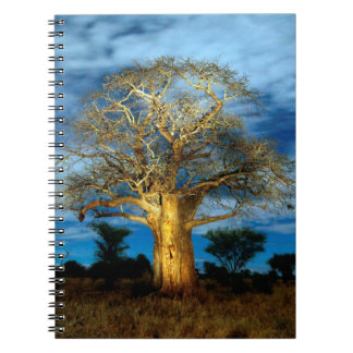 Baobab (Adansonia) Tree Light Up By The Moon Notebooks