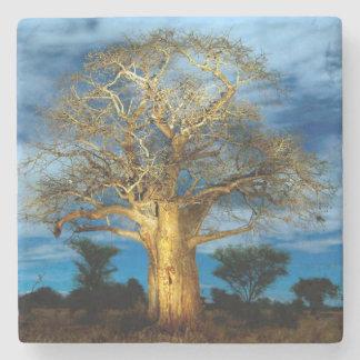 Baobab (Adansonia) Tree Light Up By The Moon Stone Beverage Coaster
