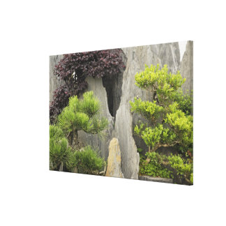 Bao's family garden, Huangshan, China. 2 Stretched Canvas Print