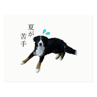 Bar needs mountain dog postcard