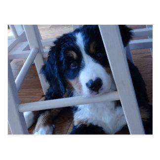 Bar needs mountain dog puppy postcard