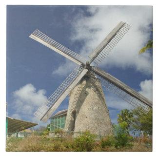 BARBADOS, North East Coast, Morgan Lewis: Morgan Large Square Tile