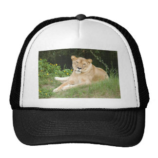Barbary Lion-set-1-010 Cap
