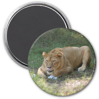 Barbary Lion-toy-015 Magnet