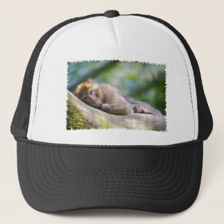Barbary macaque lying trucker hat