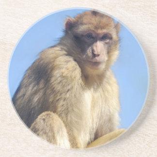 Barbary macaque sitting coaster