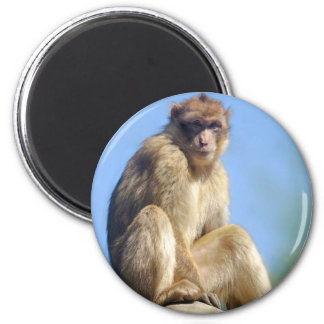 Barbary macaque sitting magnet