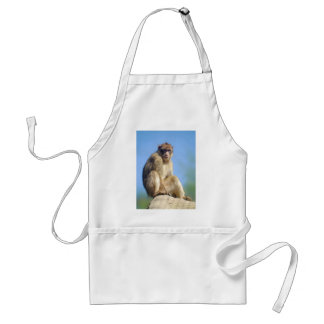 Barbary macaque sitting standard apron