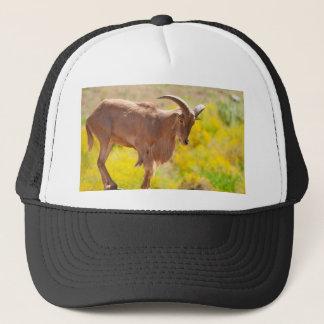Barbary sheep trucker hat
