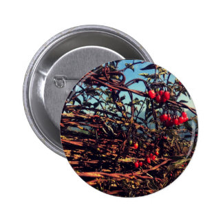 barbed wire fence pinback button