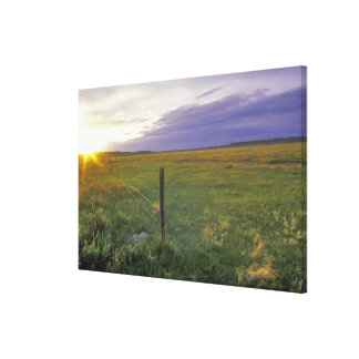 Barbed Wire Fenceline in northeastern Montana Gallery Wrapped Canvas