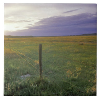 Barbed Wire Fenceline in northeastern Montana Large Square Tile
