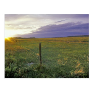 Barbed Wire Fenceline in northeastern Montana Postcard