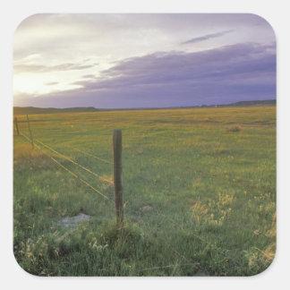 Barbed Wire Fenceline in northeastern Montana Square Sticker