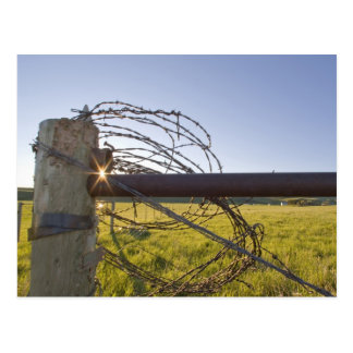 Barbed wire rolled up on fencerow near postcard