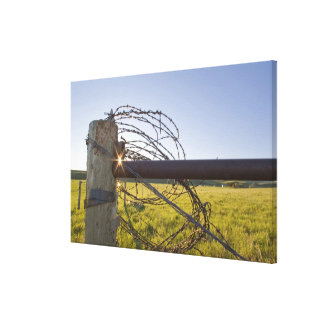 Barbed wire rolled up on fencerow near stretched canvas print