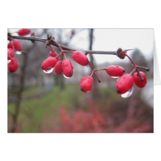 Barberries with water droplets greeting card