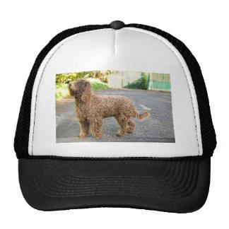 Barbet Dog Cap