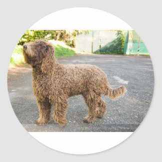 Barbet Dog Round Sticker