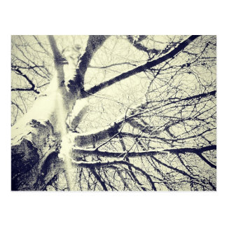 Bare black and white tree postcard