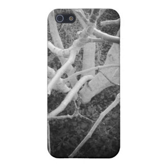 Bare Branches iPhone 5 Cover