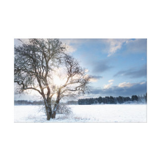 Bare tree in a snow field with early sunrise canvas print