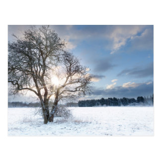 Bare tree in a snow field with early sunrise postcard
