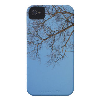 Bare Tree iPhone 4 Cases