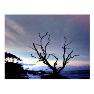 Bare Tree On Shore At Sunset Postcard