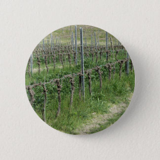 Bare vineyard field in winter . Tuscany, Italy 6 Cm Round Badge