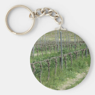 Bare vineyard field in winter . Tuscany, Italy Key Ring