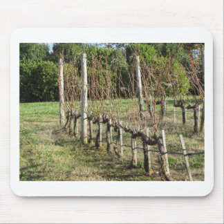 Bare vineyard field in winter . Tuscany, Italy Mouse Pad