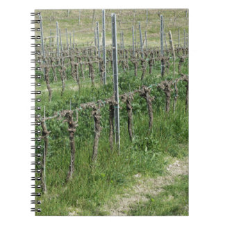 Bare vineyard field in winter . Tuscany, Italy Notebook