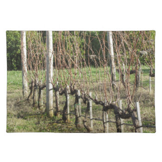 Bare vineyard field in winter . Tuscany, Italy Placemat