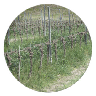 Bare vineyard field in winter . Tuscany, Italy Plate