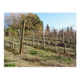 Bare vineyard field in winter . Tuscany, Italy Postcard