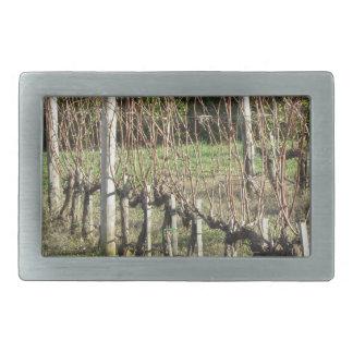 Bare vineyard field in winter . Tuscany, Italy Rectangular Belt Buckle