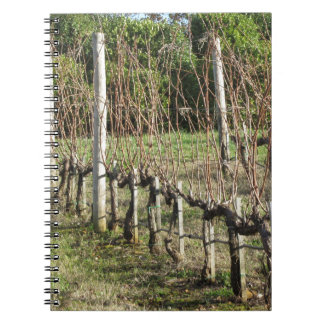 Bare vineyard field in winter . Tuscany, Italy Spiral Notebook