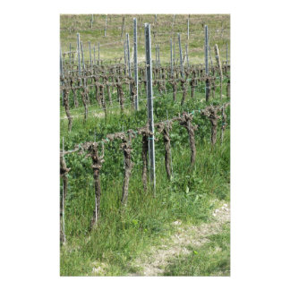 Bare vineyard field in winter . Tuscany, Italy Stationery